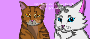 Dovewing and Tigerheart by Warriorcatsgeeks