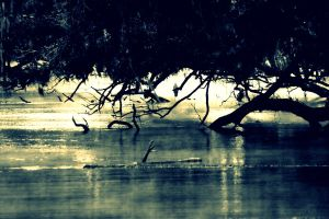 Foggy Rivers by EndeavourForever
