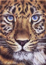 Big cat drawing by 22Zitty22