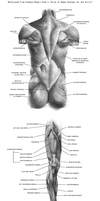 anatomy charts 5-8 by eruemcee
