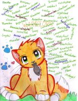Warrior CATS by forgottenlegend