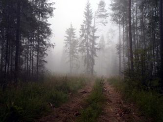 Forest 1000 by MASYON