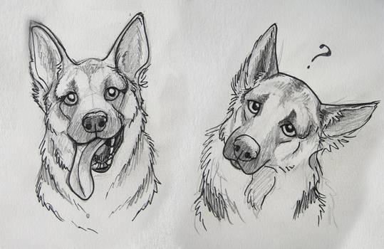 German Shepard sketches by marlynxTLK