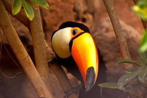 Toucan by SynneW