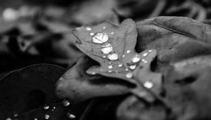 autumn jewels by airsteve