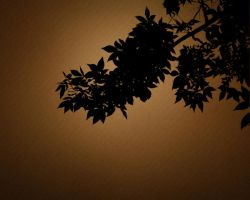 Nature Silhouette Tree by magaxion