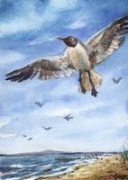 aceo gull by kailavmp