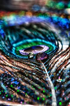 Peacock Feather Drop HDR Macro by Creative--Dragon