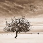symphony of loneliness by incisler