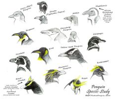 Penguin Species Study by MutantPenguin