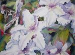 White Clematis by p-e-a-k