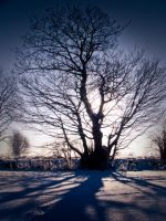 Stock: Winter tree in snow by needanewname