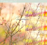 Photoshop Curves 02 .acv by IGotTheLook