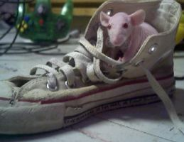 Shoe Rat by bentmywookie