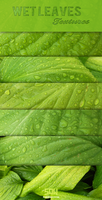 Free High Res Wet Leaf Texture Pack by sdwhaven