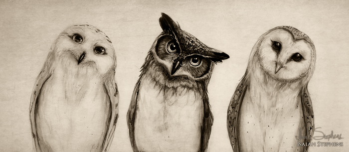 The Owls Three by IsaiahStephens