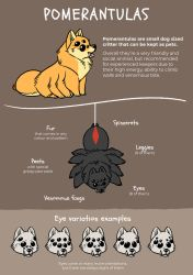 Pomerantula Guide [Semi-Open Species] by jentuyet