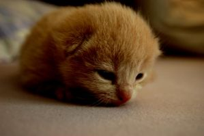 Baby Cat by sophiespetzler