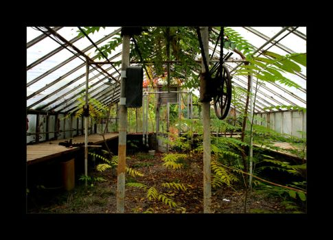 Natural Greenhouse by significantother