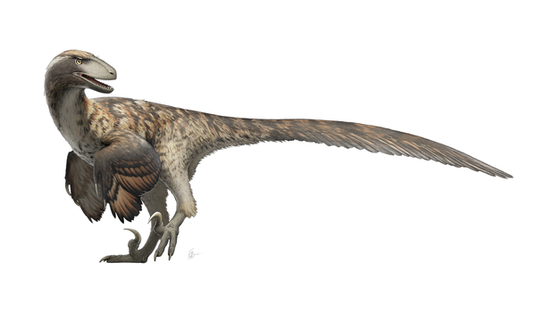 Deinonychus antirrhopus for Wikipedia by FredtheDinosaurman