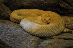 Coiled by WendiJo129