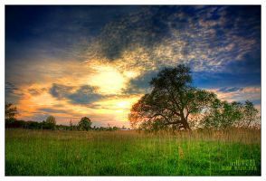 last breath of the willow by werol