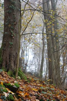 Forest Background by Noree-stock