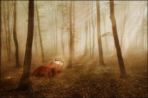 the red blanket by Floriandra