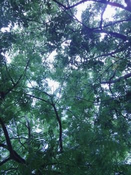 A canopy of friends by JennChant