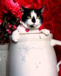 Cat In a Jug by Tyrant-ess