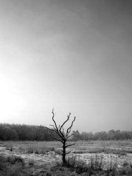 Dead tree by Nien-Ja