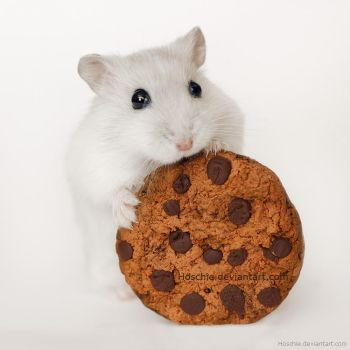 I baked you a cookie by hoschie