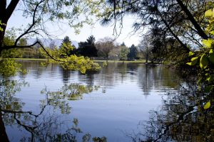 Tranquil View by ShawnHenry