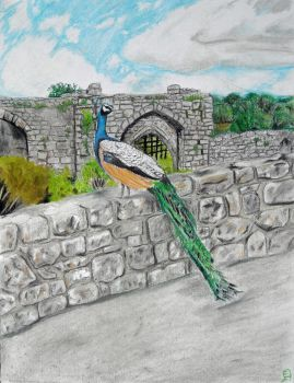 Peacock at Leeds Castle by Puppy-eater