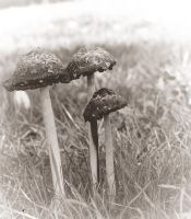 Black mushrooms by jennystokes