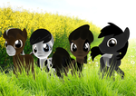 Cows Cows Cows by iLucky7
