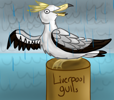 Liverpool Gulls by flocksofseagulls
