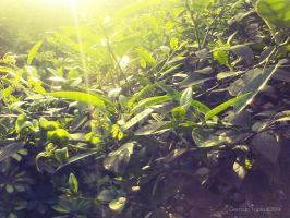 Nature and Light by Duophased