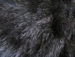 Fur Texture 01. by stock-basicality