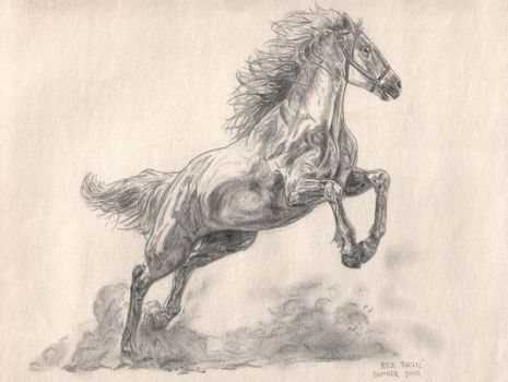 The Silver Brumby by artifexa