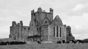 Dunbrody Abbey by UdoChristmann