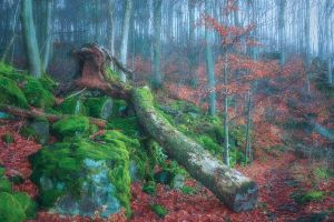 treasures of the forest by edinaB
