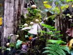 Mushrooms and Moss by Hederahelix82688