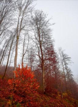 Bloodred Forest XIV by Aenea-Jones