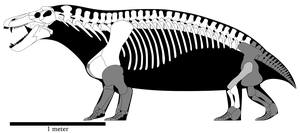 Jonkeria truculenta skeletal reconstruction by SpinoInWonderland