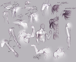 Upper arm and shoulder anatomy by moni158
