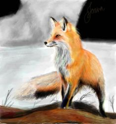 Standing Fox by Joava
