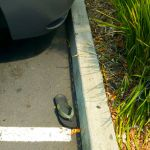 Green Flip Flop El Cerrito 8/20/2016 by squirrelbrained