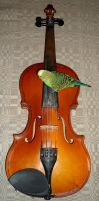 Parrot playing violin by AinePi
