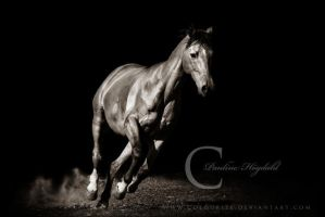 Out of Shadows by Colourize